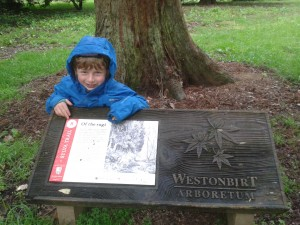 Sylva trail - Westonbirt - Of the sugi