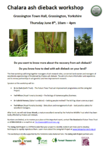 Ash dieback workshop