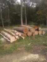 Timber felled on the Blenheim Estate for the prototype work for the House of Wessex