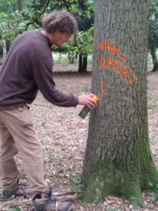 Marking out a wall plate for the House of Wessex at Blenheim Estates