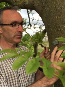 Gabriel Hemery inspecting an ash tree fitted with an AshTag