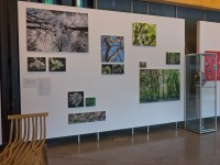 Photographs of the OneOak woodland by Jane King