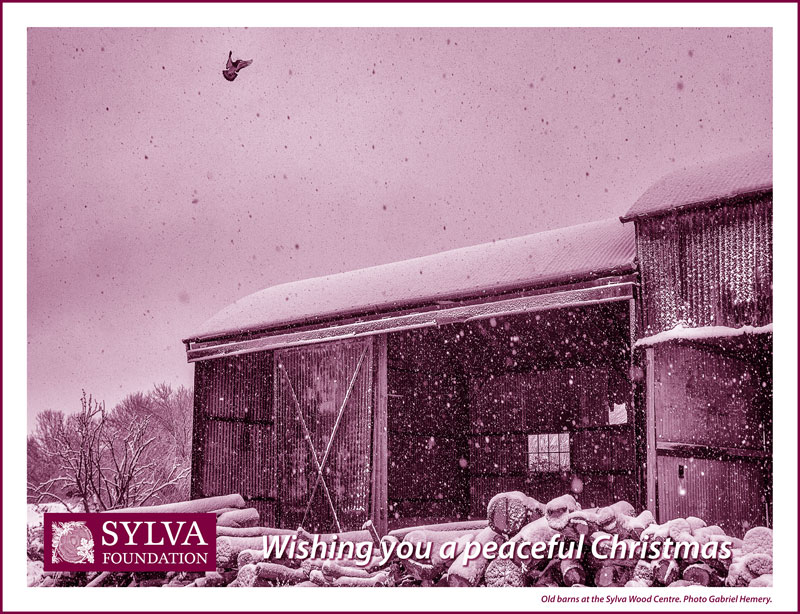 Merry Christmas from Sylva Foundation