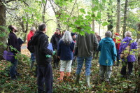 Helping Hands for Heritage volunteers at Tamar Valley AONB learning how to tag ash trees, and contribute towards the Living Ash Project