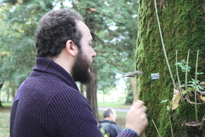 Helping Hands for Heritage volunteer at Tamar Valley AONB learning how to tag ash trees, and contribute towards the Living Ash Project