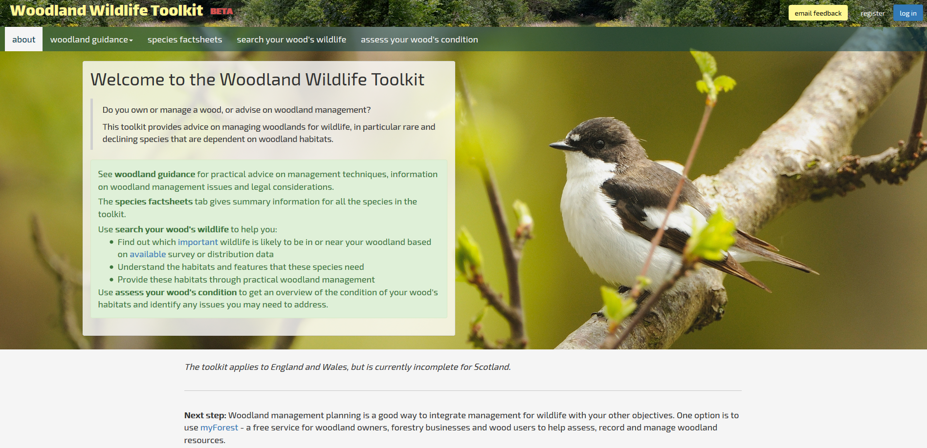 Woodland Wildlife Toolkit