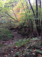 Woodland habitat around the stream