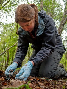 Sylva Scholar Kirsty Monk conducting fieldwork mapping fungal cords