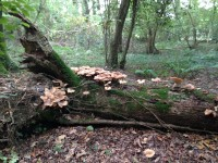 deadwood habitat in Sonia's wood
