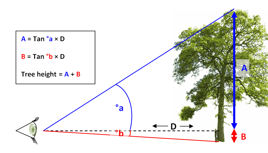 Tree height was calculated using trigonometry from measurements taken using
